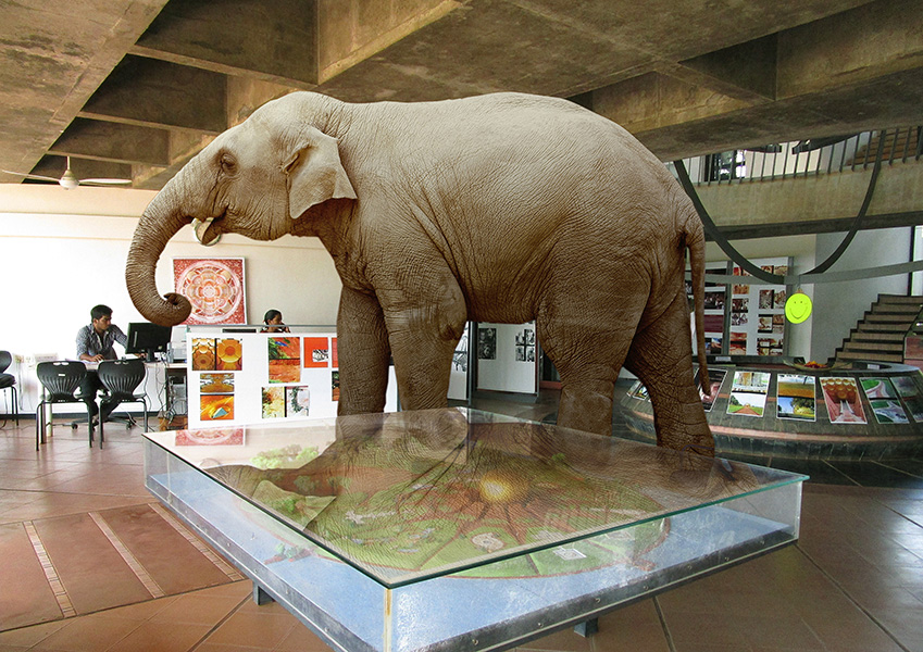 Elephant in Town Hall