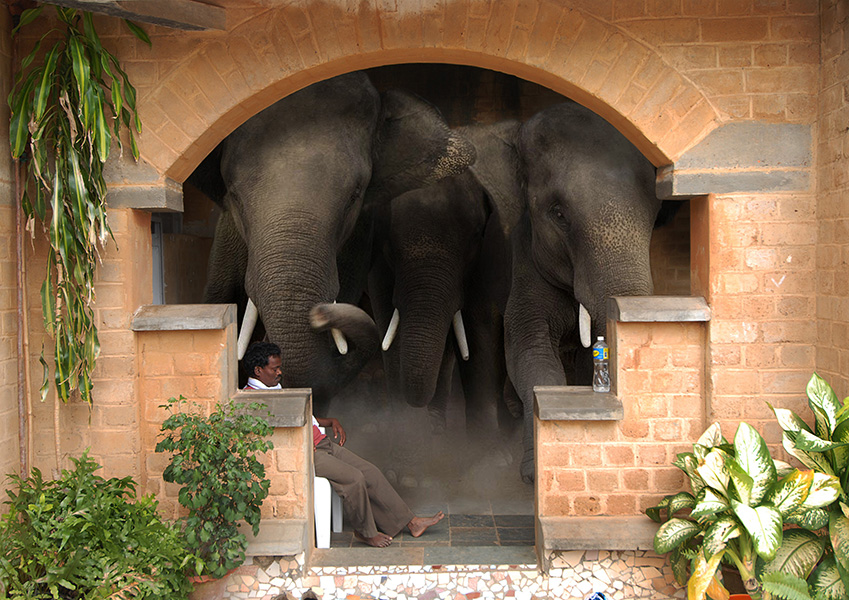 Elephant in the Visitors Centre
