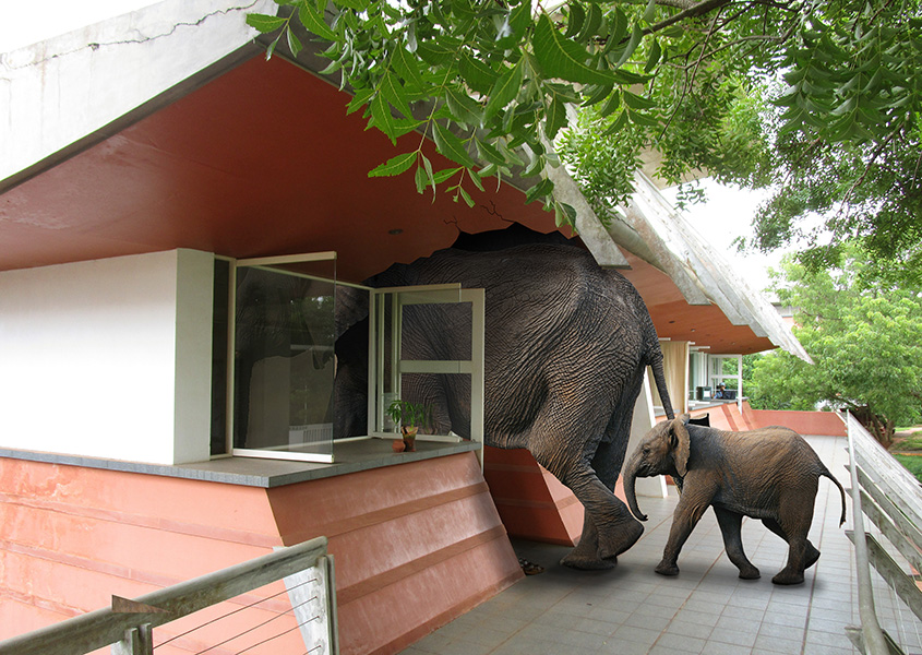Elephants in Entry Service office