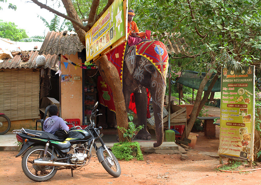 Elephant coming out from a shop