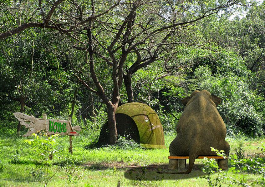 Elephant waiting for a house