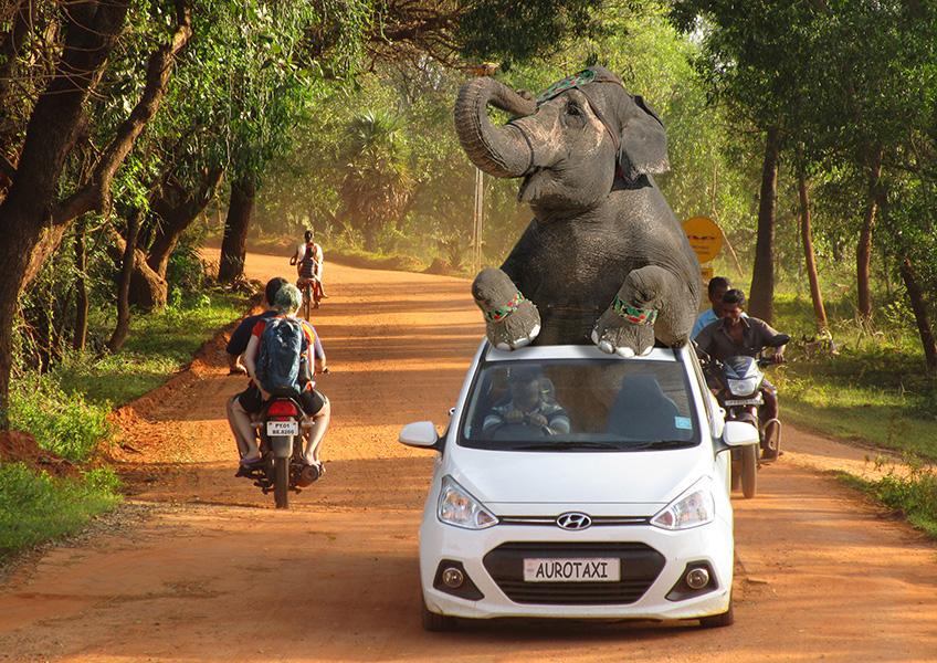 Elephant on a taxi