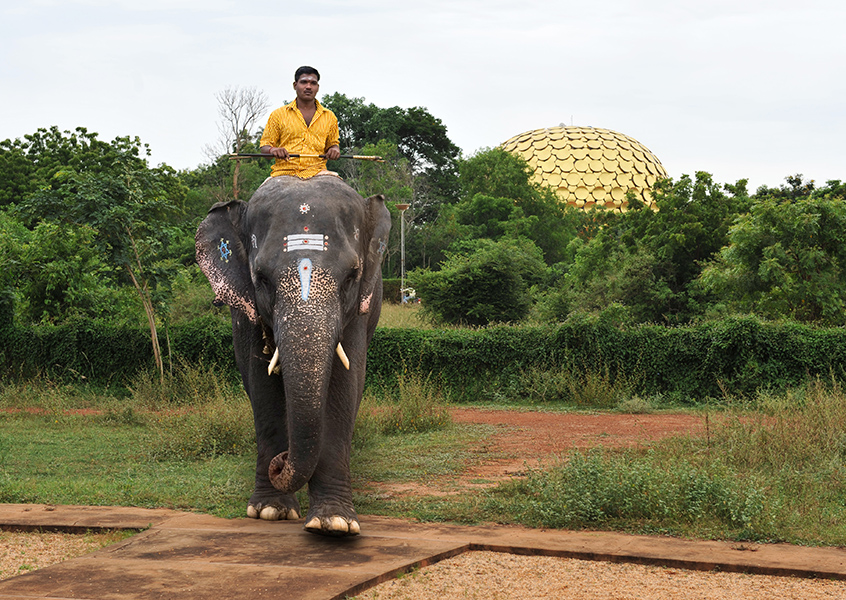 Elephant in Auroville
