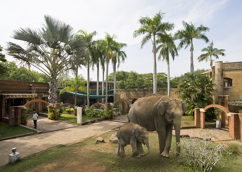 Elephants in Visitors Centre